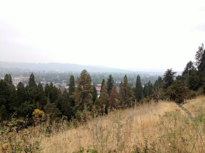 View from a hill in Eugene, Oregon.