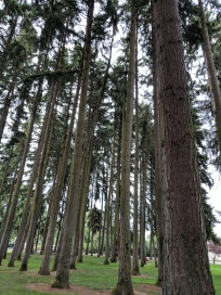 Trees in a park in Eugene, Oregon.